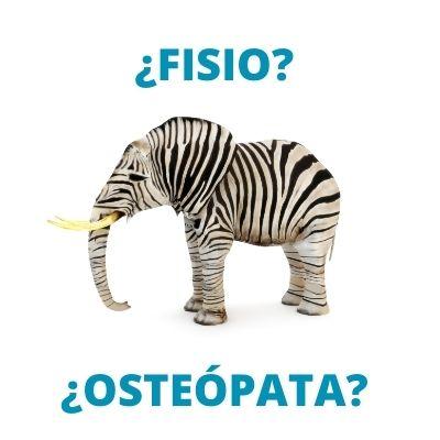 Diferencia entre osteópata y fisio. Elefante que es cebra y cebra que es elefante